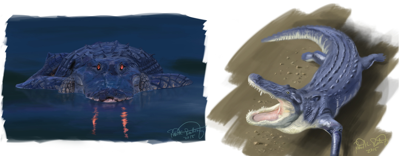 display_Gator-Sketches-03-25-15-ForWeb