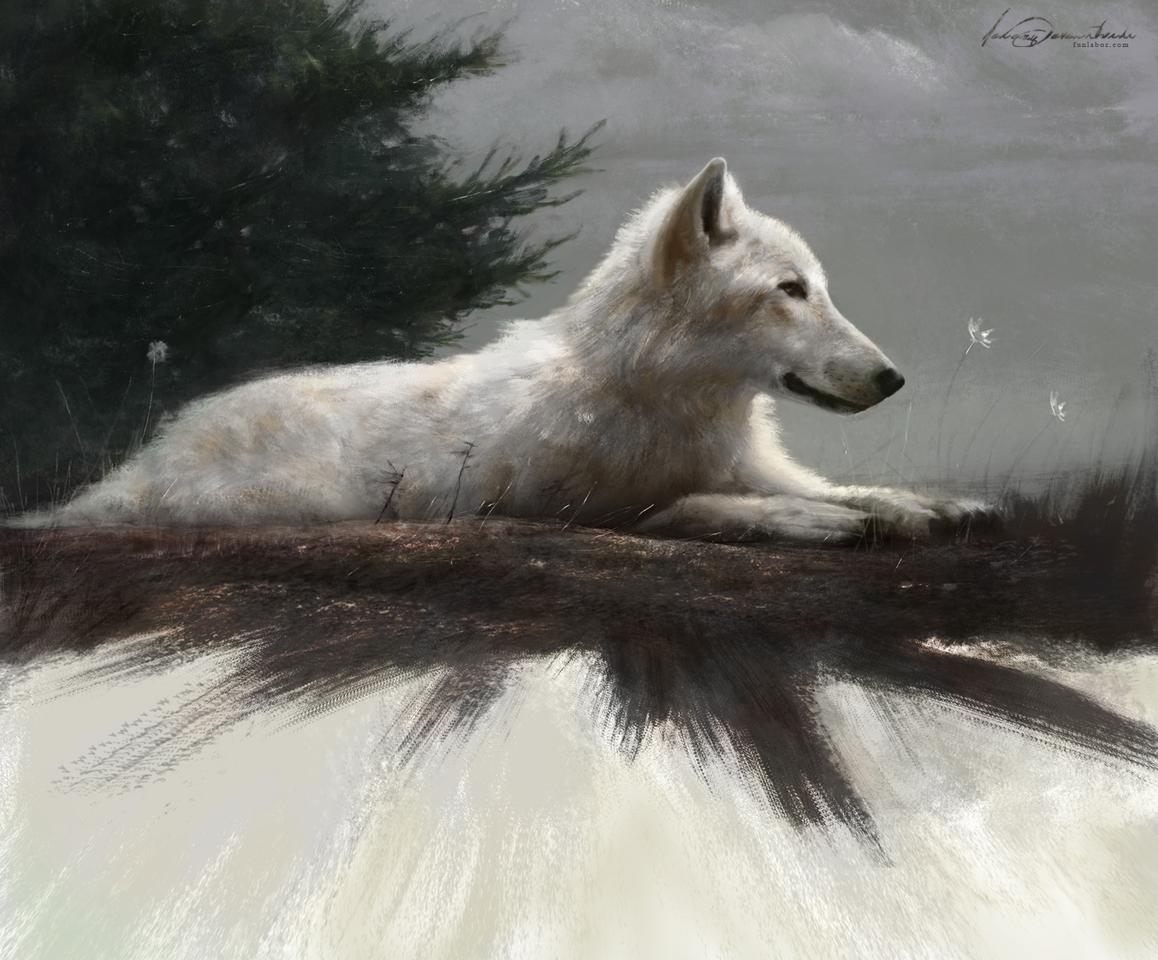 display_jeremyd_funlaborcom_wolfy