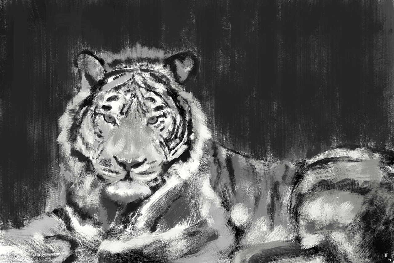 display_tiger_sketch