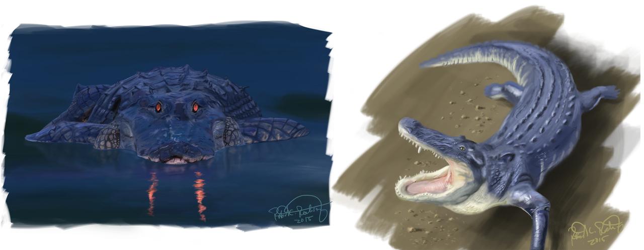 display_Gator-Sketches-03-25-15-ForWeb
