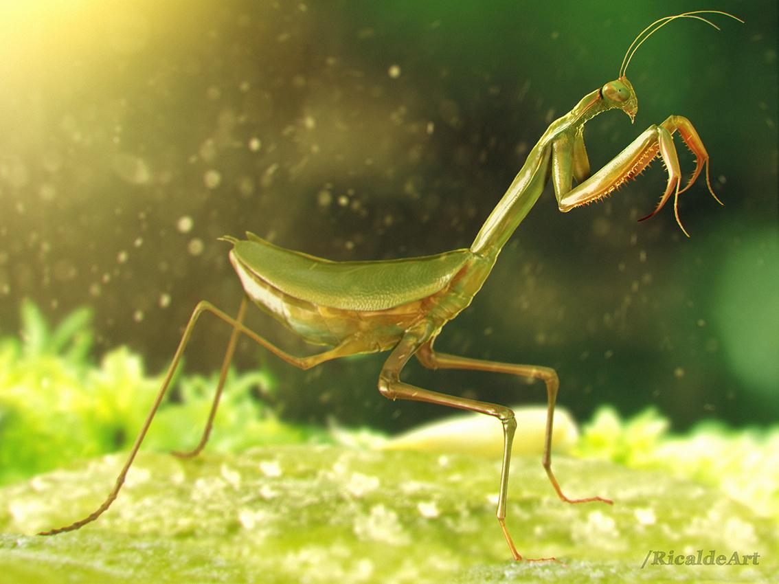 display_mantis
